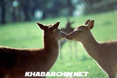 عکس+عشقولانه+حیوانات